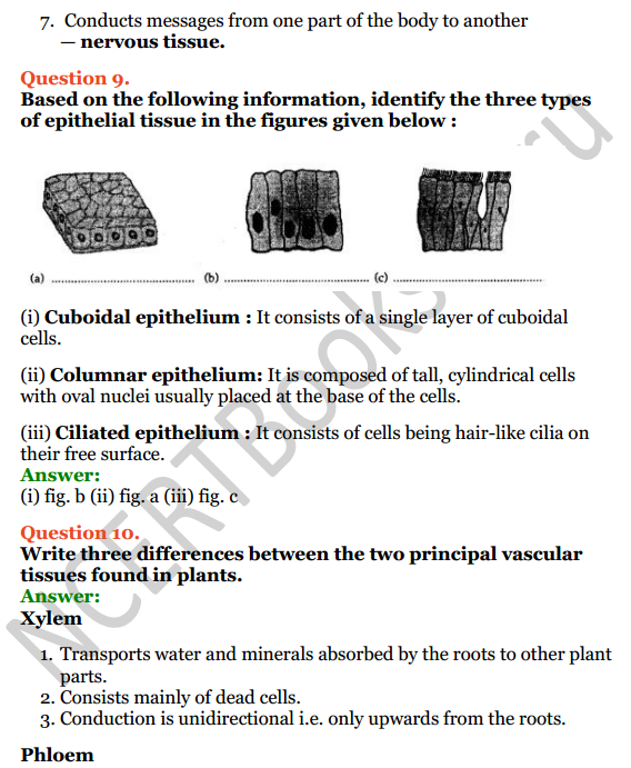Selina Concise Biology Class 7 ICSE Solutions Chapter 1 Plant and Animal Tissues 7