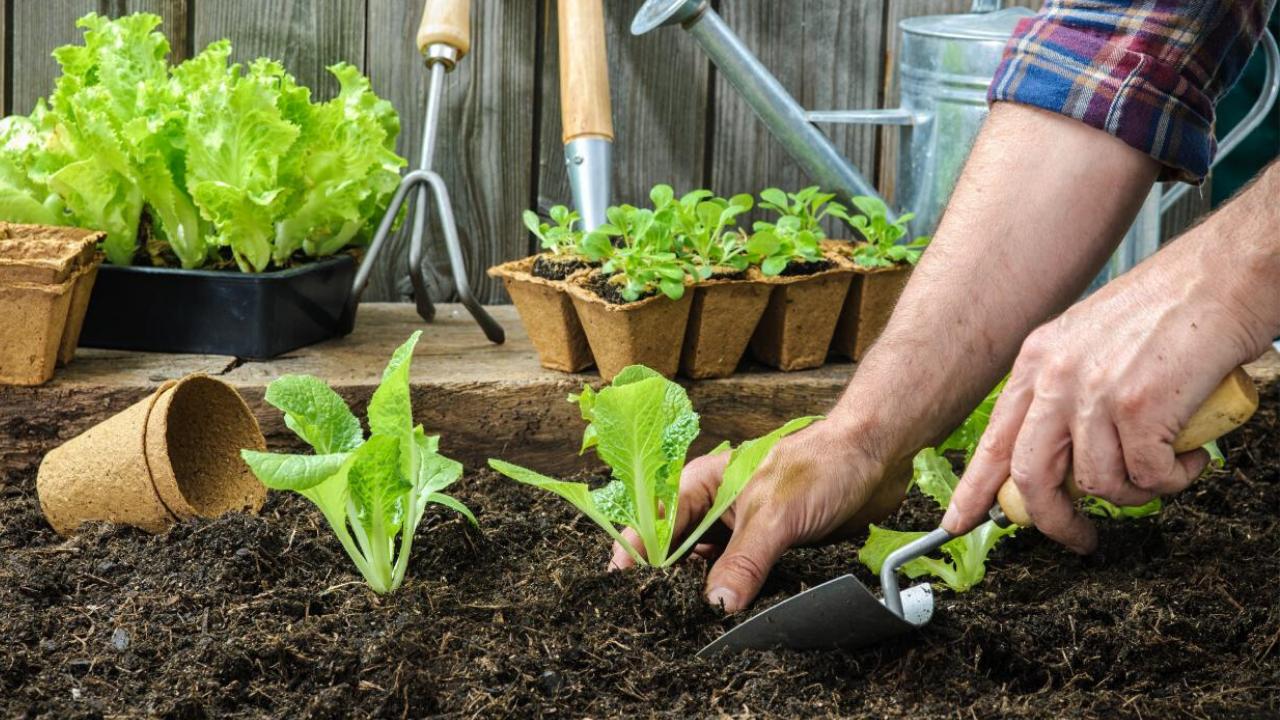 Gardening As a Hobby Essay