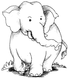 The Elephant Essay