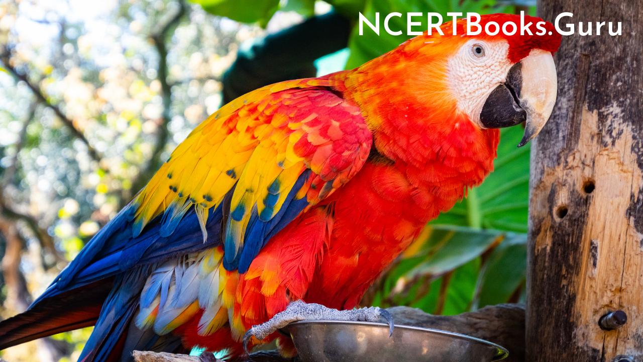 10 Lines about My Pet Parrot