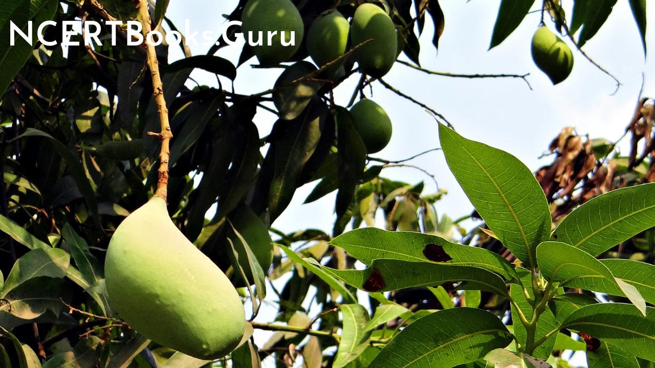 10 Lines for Mango Tree