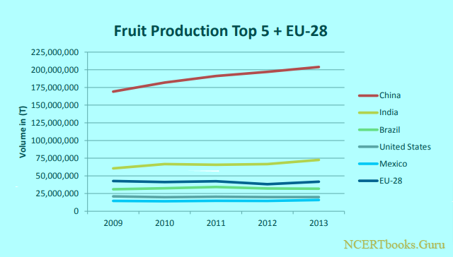 top 5 ranked Fruit production countries in the world