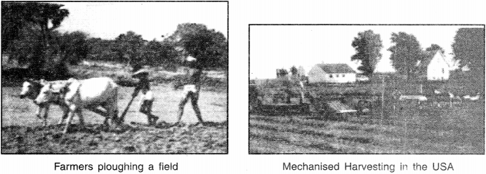 NCERT Solutions for Class 8 Social Science Geography Chapter 4 Agriculture 1