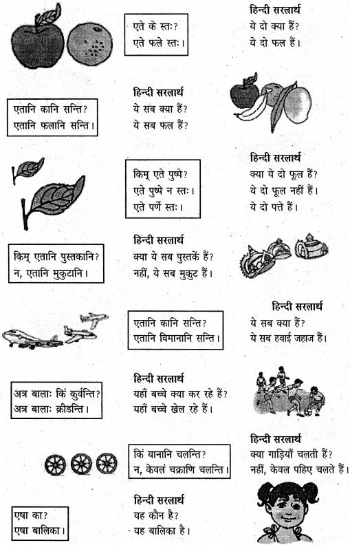 NCERT Solutions for Class 6 Sanskrit Chapter 3 शब्द परिचयः 3 4